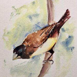A watercolour painting of a mynah bird